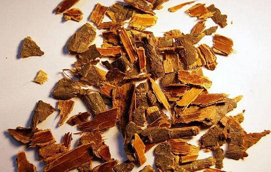 применение коры крушины, полезные свойства