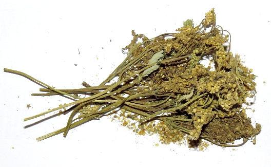 Лабазник - лечебные свойства и противопоказания таволги