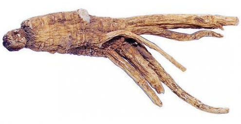 корень дягиля лечебные свойства