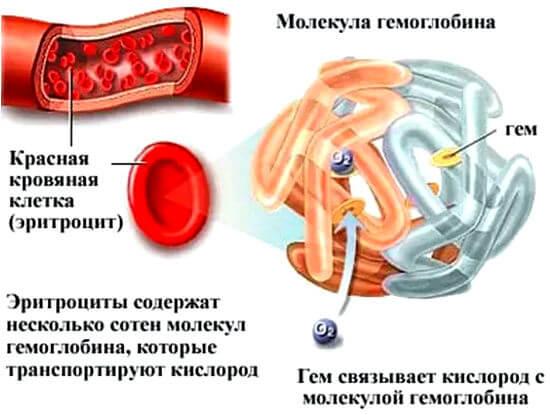 Повышенный гемоглобин в крови - причины, симптомы, лечение