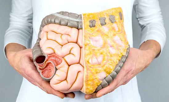 нормы висцерального жира