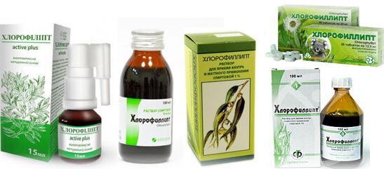 польза и вред хлорофиллипта