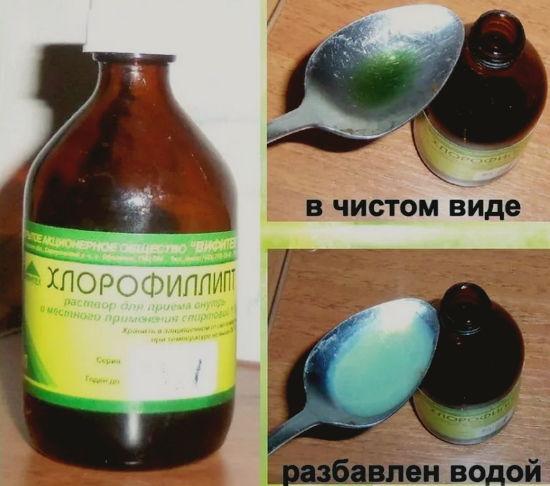применение хроофиллипта в медицине