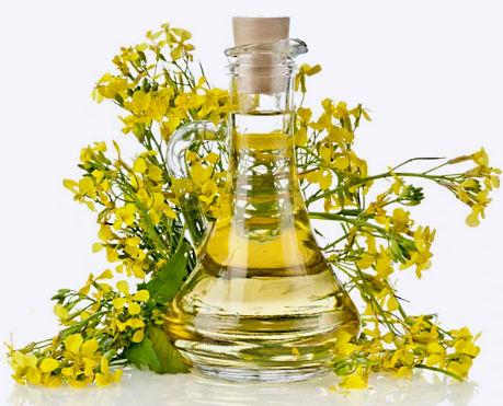 применение рапсового масла и противопоказания
