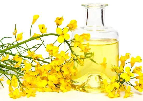 рапсовое масло - польза и вред