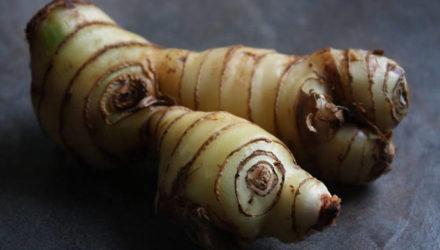 Калган корень – лечебные свойства и противопоказания, приготовление настойки, отвара, чая