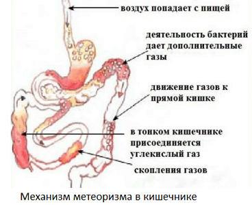 механизм отбразования газов в кишечнике