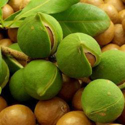 Макадамия — польза и вред, полезные свойства масла, орехов, применение, фото