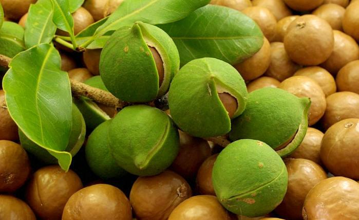 орех макадамия - польза