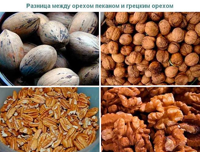 отличие пекана и грецкого ореха