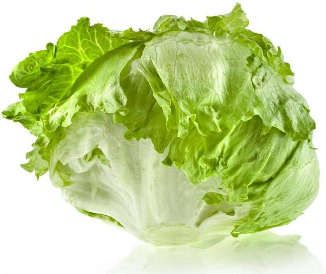 салат айсберг что за растение