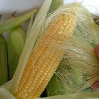 Кукурузные рыльца — лечебные свойства и противопоказания к применению