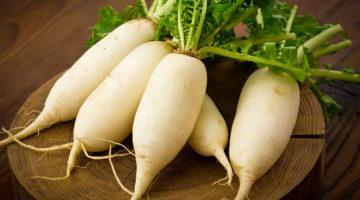 Дайкон — полезные свойства и противопоказания японской редьки, применение в медицине и кулинарии