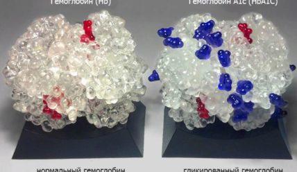 Гликированный гемоглобин — что показывает, как сдавать правильно, норма