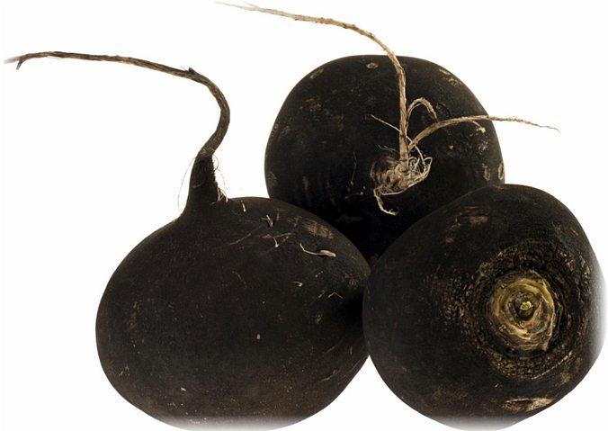 черная редька - полезные свойства для организма