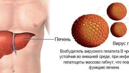 Гепатит B, как передается, симптомы, диагностика, лечение