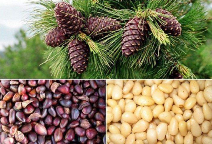 кедровые орехи - польза для организма
