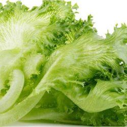 Салат листовой посевной (латук) — описание, польза и вред, лечение, рецепты