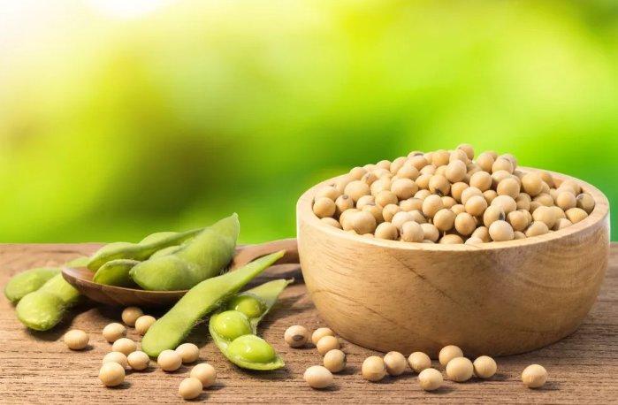 полезные свойства сои и соевого масла