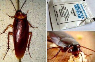 как избавиться от тараканов в квартире иидоме раз и навсегда