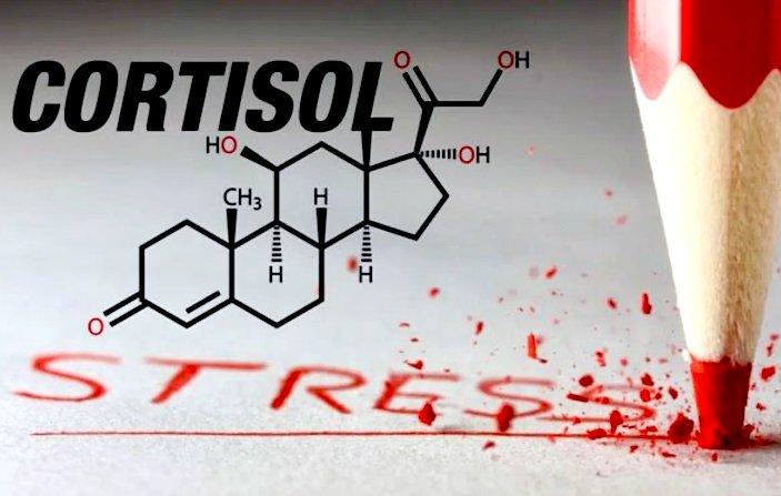 кортизол вызывает стресс