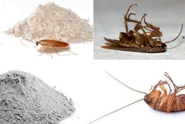 народные средства избавления от тараканов