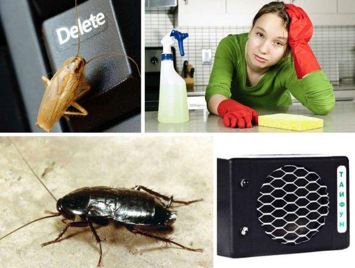 выведение тараканов дома