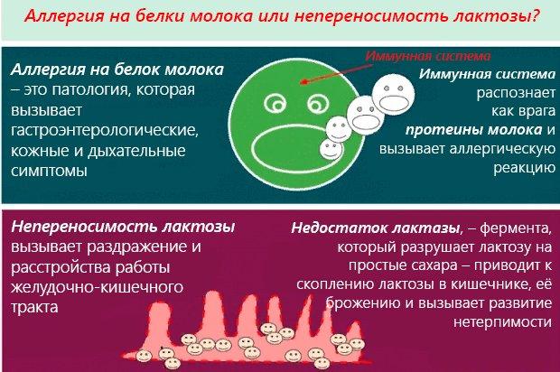 как отличить непереносимость лактозы или аллергия