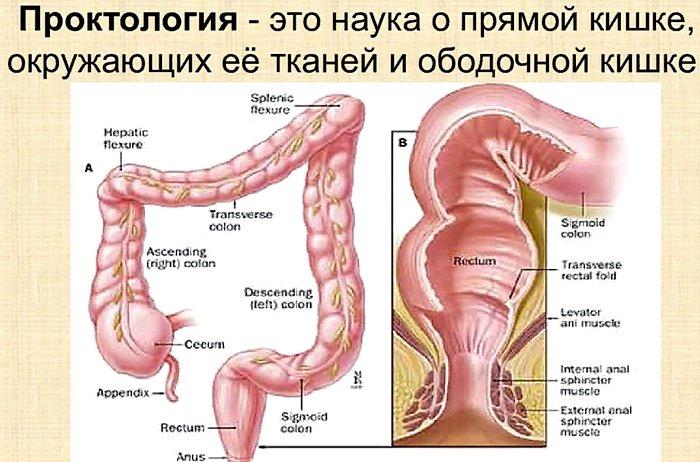 что такое проктология