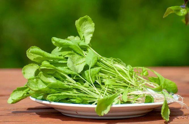 кресс-салат - лучшая зелень для здоровья