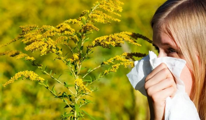 аллергия на цветение трав