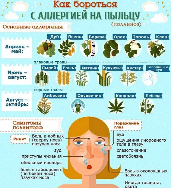 периоды цветения при аллергии на пыльцу