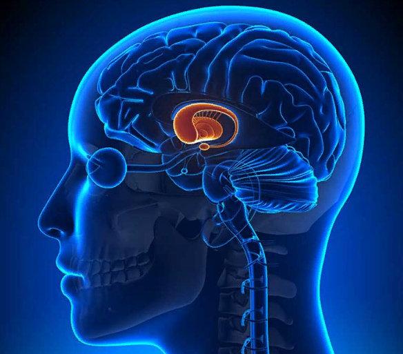 расположение гипофиза в голове