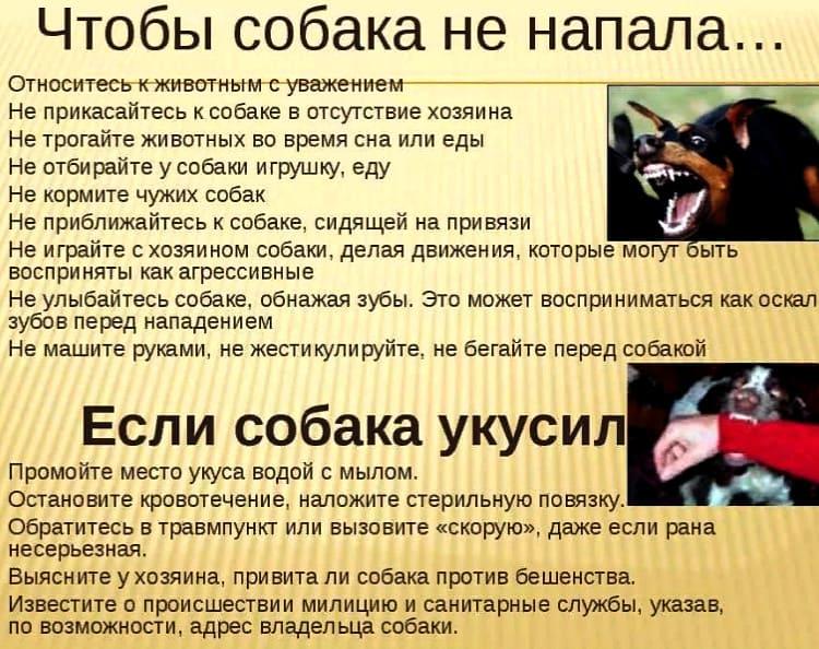 чтобы собака не напала